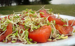 fenogreco_tomates